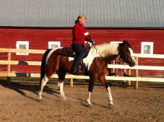 Horseman's Park Alberta, April Reeves, Horse Training