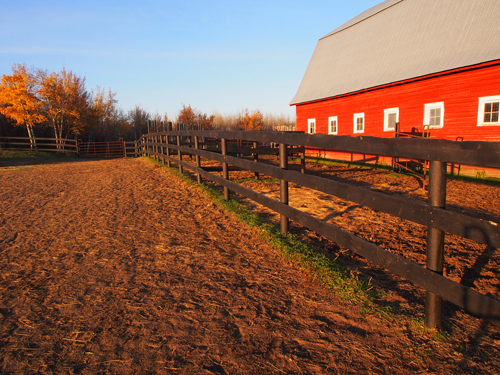 Corrals line the side of the barn at Horseman's Park Alberta